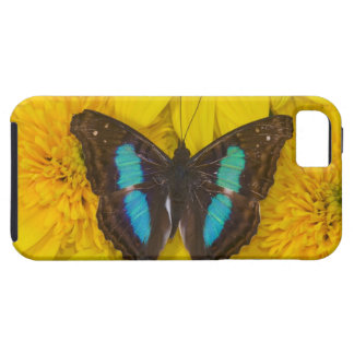 Sammamish Washington Photograph of Butterfly on 7 Tough iPhone 5 Case