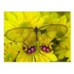 Sammamish Washington Photograph of Butterfly on 8