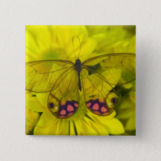 Sammamish Washington Photograph of Butterfly on 8 15 Cm Square Badge