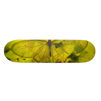 Sammamish Washington Photograph of Butterfly on 8 21.6 Cm Old School Skateboard Deck