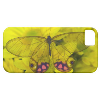 Sammamish Washington Photograph of Butterfly on 8 Barely There iPhone 5 Case