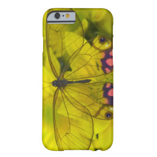 Sammamish Washington Photograph of Butterfly on 8 Barely There iPhone 6 Case