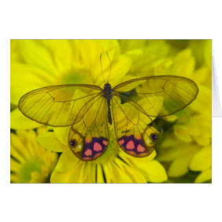 Sammamish Washington Photograph of Butterfly on 8 Card