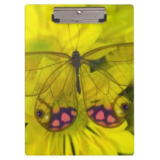 Sammamish Washington Photograph of Butterfly on 8 Clipboard