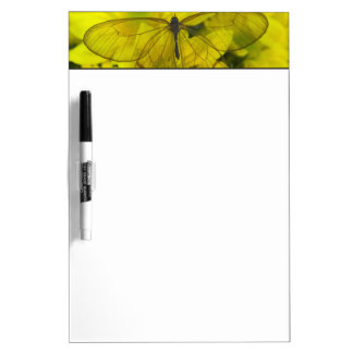 Sammamish Washington Photograph of Butterfly on 8 Dry Erase Board