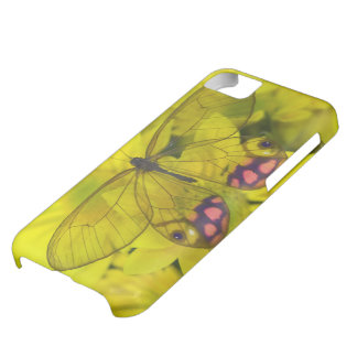 Sammamish Washington Photograph of Butterfly on 8 iPhone 5C Case