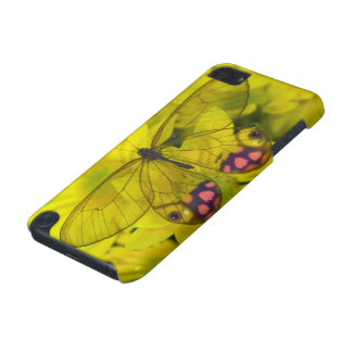Sammamish Washington Photograph of Butterfly on 8 iPod Touch (5th Generation) Case