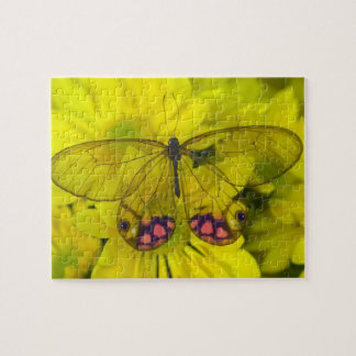 Sammamish Washington Photograph of Butterfly on 8 Jigsaw Puzzle