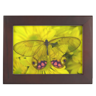 Sammamish Washington Photograph of Butterfly on 8 Keepsake Box