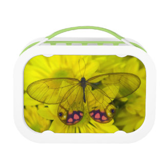 Sammamish Washington Photograph of Butterfly on 8 Lunch Box
