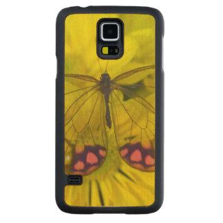 Sammamish Washington Photograph of Butterfly on 8 Maple Galaxy S5 Slim Case