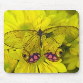Sammamish Washington Photograph of Butterfly on 8 Mouse Mat