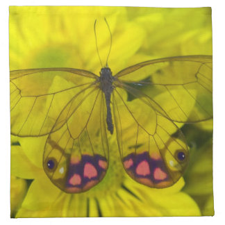 Sammamish Washington Photograph of Butterfly on 8 Napkin