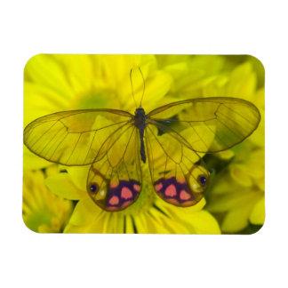 Sammamish Washington Photograph of Butterfly on 8 Rectangular Photo Magnet