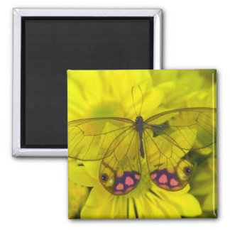 Sammamish Washington Photograph of Butterfly on 8 Square Magnet