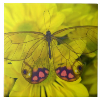 Sammamish Washington Photograph of Butterfly on 8 Tile