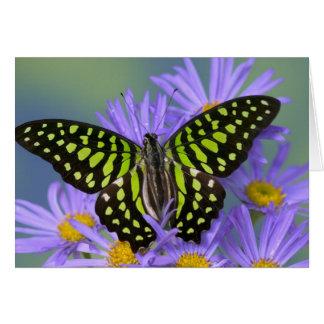 Sammamish Washington Photograph of Butterfly on 9 Card