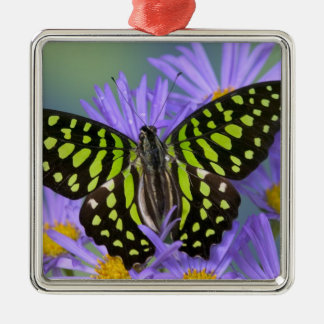 Sammamish Washington Photograph of Butterfly on 9 Christmas Ornament