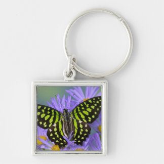 Sammamish Washington Photograph of Butterfly on 9 Key Ring