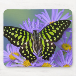 Sammamish Washington Photograph of Butterfly on 9 Mouse Mat