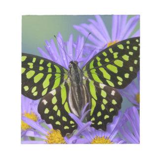 Sammamish Washington Photograph of Butterfly on 9 Notepad
