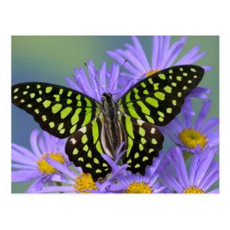Sammamish Washington Photograph of Butterfly on 9 Postcard