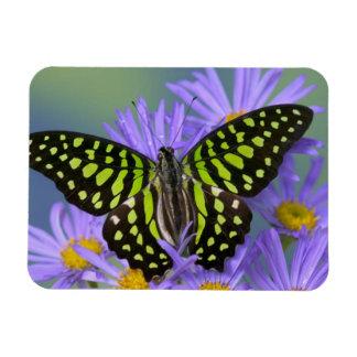 Sammamish Washington Photograph of Butterfly on 9 Rectangular Photo Magnet
