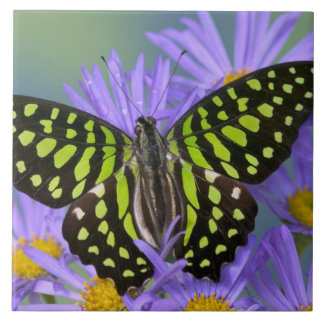 Sammamish Washington Photograph of Butterfly on 9 Tile