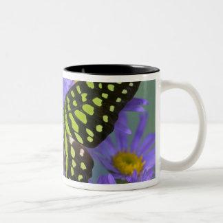 Sammamish Washington Photograph of Butterfly on 9 Two-Tone Coffee Mug