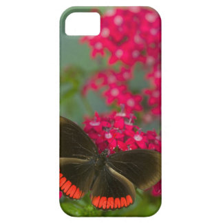 Sammamish Washington Photograph of Butterfly on Barely There iPhone 5 Case