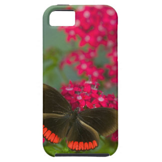 Sammamish Washington Photograph of Butterfly on Case For The iPhone 5