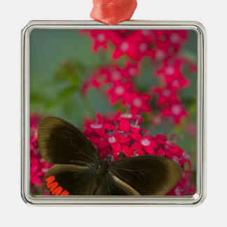 Sammamish Washington Photograph of Butterfly on Christmas Ornament