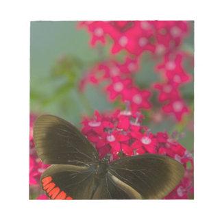 Sammamish Washington Photograph of Butterfly on Notepad