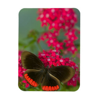 Sammamish Washington Photograph of Butterfly on Rectangular Photo Magnet