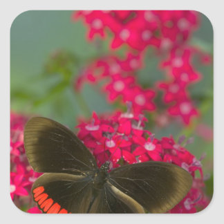 Sammamish Washington Photograph of Butterfly on Square Sticker