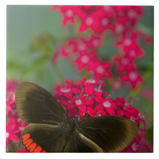 Sammamish Washington Photograph of Butterfly on Tile
