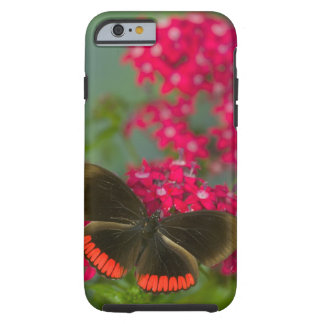 Sammamish Washington Photograph of Butterfly on Tough iPhone 6 Case