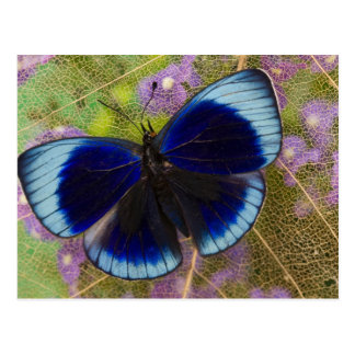 Sammamish Washington Photograph of Butterfly Postcard