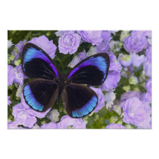 Sammamish Washington Photograph of Butterfly Poster