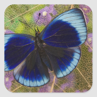Sammamish Washington Photograph of Butterfly Square Sticker