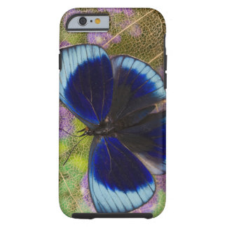 Sammamish Washington Photograph of Butterfly Tough iPhone 6 Case