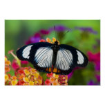 Sammamish, Washington. Tropical Butterflies