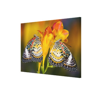 Sammamish, Washington. Tropical Butterflies 10 Canvas Print