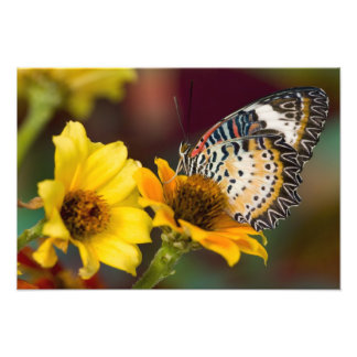 Sammamish, Washington. Tropical Butterflies 10 Photo Art