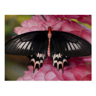 Sammamish, Washington. Tropical Butterflies 10 Postcard