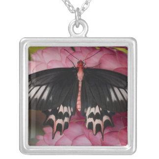 Sammamish, Washington. Tropical Butterflies 10 Square Pendant Necklace