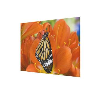 Sammamish, Washington. Tropical Butterflies 11 Canvas Print