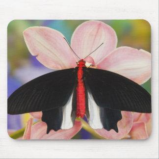 Sammamish, Washington. Tropical Butterflies 11 Mouse Mat