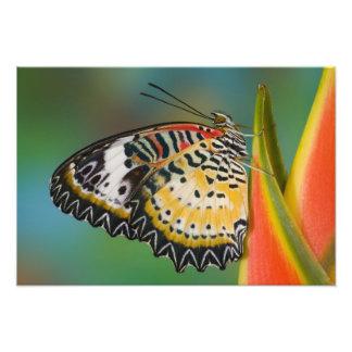 Sammamish, Washington. Tropical Butterflies 11 Photo Print