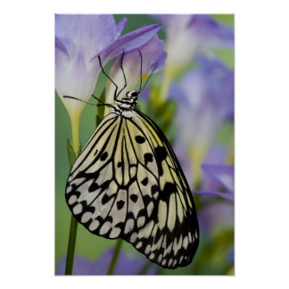 Sammamish, Washington. Tropical Butterflies 11 Poster